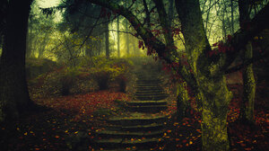 Forest Trees Landscape Nature Mist Fall Steps Leaves Photography 2048x1365 Wallpaper