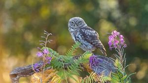 Bird Bokeh Owl Wildlife 2048x1365 Wallpaper