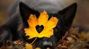 Cute Dog Fall Heart Leaf Pet 2048x1367 Wallpaper