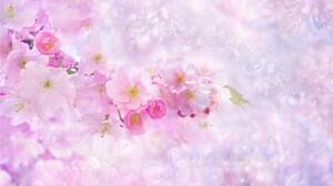 Artistic Blossom Branch Pink Flower Sakura 3500x2000 Wallpaper