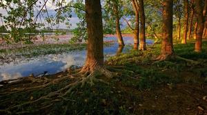 Lake Roots Tree 2560x1440 Wallpaper