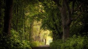 Forest Tree Netherlands 2048x1365 Wallpaper