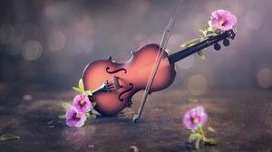 Flowers Plants Violin Musical Instrument 1920x1282 Wallpaper