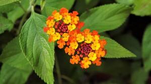 Colorful Colors Earth Flower Leaf Orange Flower 3456x2304 Wallpaper