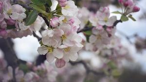 Blossom Flower Nature Spring White Flower 2048x1365 Wallpaper