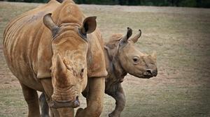 Animal Rhino 4000x2666 Wallpaper