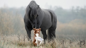 Dog Horse Pet 1920x1280 Wallpaper