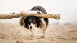 Border Collie Depth Of Field Dog Pet Sand 2048x1269 Wallpaper