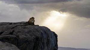 Big Cat Lion Rock Wildlife Predator Animal 2048x1366 Wallpaper