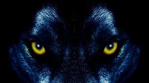 Animal Stare Wolf 3840x2160 wallpaper