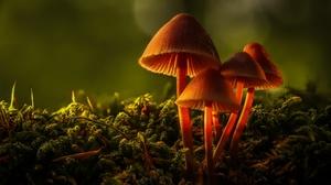 Fall Macro Mushroom Nature 2048x1365 Wallpaper
