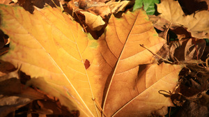 Earth Leaf 1920x1200 Wallpaper