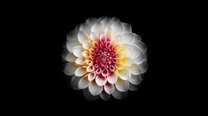 Dahlia Flower White Flower 5120x2880 wallpaper
