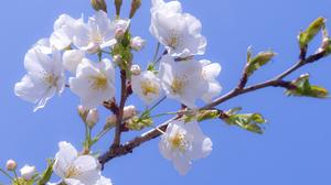 Earth Blossom 2560x1600 Wallpaper
