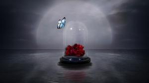 Artistic Butterfly Glass Jar Red Rose Rose 1920x1200 wallpaper