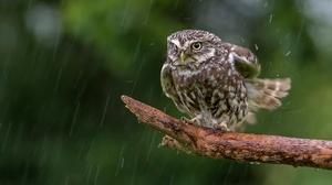 Bird Owl Rain Wildlife 2048x1365 Wallpaper