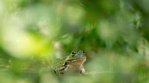 Amphibian Wildlife Green 2560x1454 Wallpaper