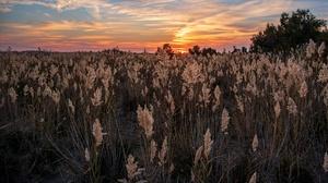Field Sunset 2800x1534 Wallpaper