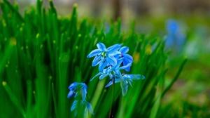 Blue Flower Bluebell Blur Spring 2880x1859 wallpaper