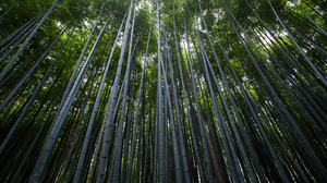 Photography Nature Bamboo Forest 5472x3648 Wallpaper