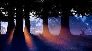 Elk Trees Silhouette Sun Rays Animals Forest 1920x1080 Wallpaper