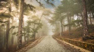 Outdoors Sunlight Trees Plants Road Cobblestone 2048x1152 Wallpaper