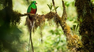Bird Quetzal Wildlife 2048x1365 Wallpaper