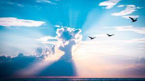 Bird Cloud 5472x3648 wallpaper