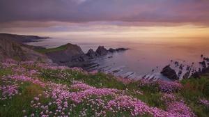 Coastline Horizon Nature Ocean Pink Flower 2048x1356 wallpaper
