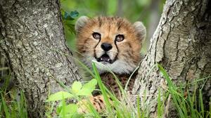 Baby Animal Cub Wildlife 2000x1334 Wallpaper