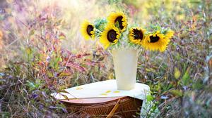 Basket Flower Nature Still Life Summer Yellow Flower 4500x3000 Wallpaper