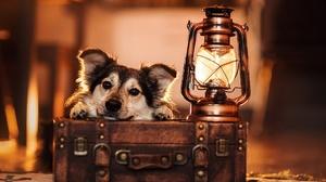Lantern Suitcase Pet 2048x1365 Wallpaper
