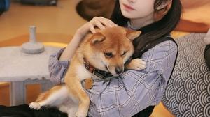 Chinese Long Hair Brunette Women Asian Dog Twintails 2688x4032 Wallpaper