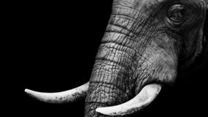 Animal Elephant 4390x2732 Wallpaper