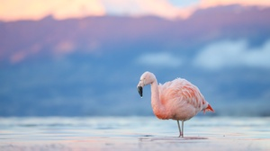 Bird Flamingo Wildlife 2048x1262 wallpaper