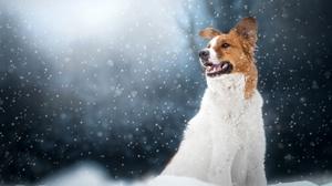 Animal Dog 4295x2863 Wallpaper