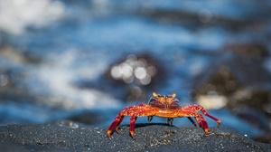 Crab Crustacean Wildlife 2000x1335 wallpaper