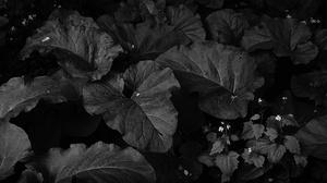 Black Amp White 5383x3687 Wallpaper