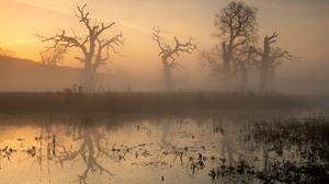 Mist Lake Water Winter Outdoors Landscape Sunlight Swamp Sky Photography Dead Trees Morning Sunrise 2025x1350 Wallpaper