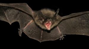 Animal Bat 4698x2249 wallpaper