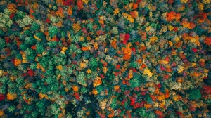 Aerial Forest Nature 3603x2400 wallpaper