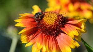 Beetle Flower Insect 4695x3130 Wallpaper
