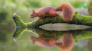 Moss Reflection Wildlife 2048x1365 Wallpaper