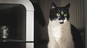 Cat Pet 2546x1600 wallpaper