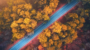 Forest Road Fall Nature Orange Top View Aerial Sunlight Foliage Trees 5048x3640 Wallpaper