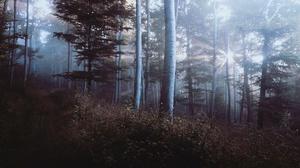 Fog Forest Path Pine Tree Sunbeam 3840x2160 Wallpaper