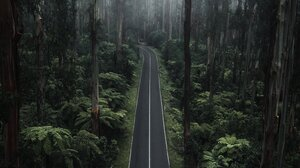Road Forest Plants Nature Portrait Display Mist Trees 1535x2048 Wallpaper