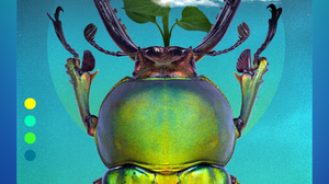 Globe Insect 2000x2960 Wallpaper