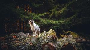 Dog Pet 2048x1264 wallpaper