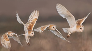 Owl Bird Wildlife 2048x1101 Wallpaper